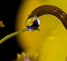 Just a drop a day should do you by Hal Smith