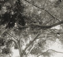 A Canopy of Curvilinear Branches and Beautiful Foliage in Black and White by Ivana Redwine