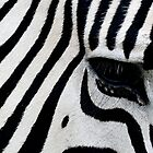 Loud Stripes by Lynda   McDonald