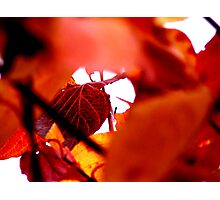 Autumn leaves - Red Photographic Print