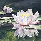 Waterlily's by J-C Saint-Pô