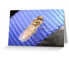 Gold on blue, a hover-fly Greeting Card
