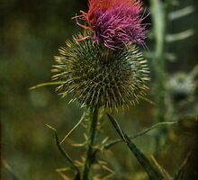 Thistle by Aaron Campbell