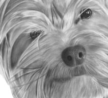 Yorkshire Terrier - Dry Brush Oil Painting Sticker