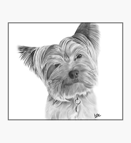 Yorkshire Terrier - Dry Brush Oil Painting Photographic Print