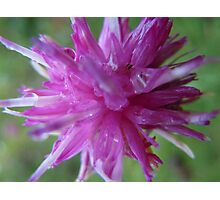 Pink flower macro Photographic Print
