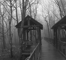 Chehaw State park , Anniston   Alabama by Tracey Hampton