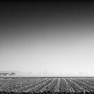 Minimal Monochrome Winter Landscape by Joel Tjintjelaar