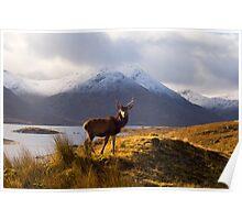 Wild Scotland Poster