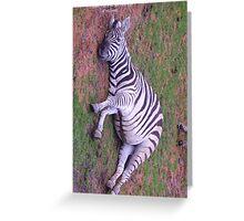Listening Zebra Greeting Card
