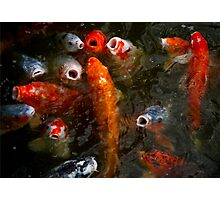 KOI! Photographic Print