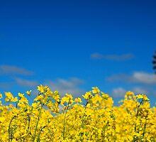 Golden Fields by Karyn Knight