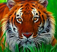 Sumatran Tiger by Beverly Lussier