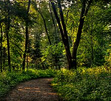 The Path to Nature by Jayme Rutherford