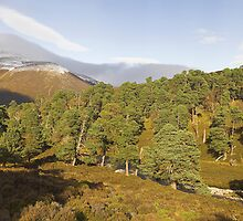 Cairngorms Forest by Duncan Shaw