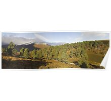Cairngorms Forest Poster