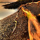 Driftwood by Tim Poitevin
