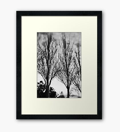 The Magic Trees - Sydney - Australia Framed Print