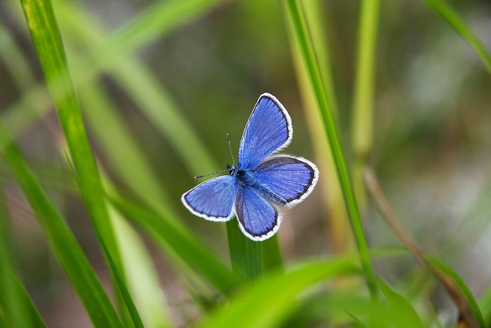 Blue Butterfly by Markku Vitikainen
