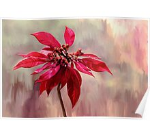 Poinsettia Painting Poster