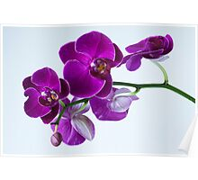 Orchid No. 2 Poster