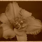 Just Peachy (in Sepia) by Expressions &  Reflections