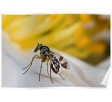 Tiny fly Poster