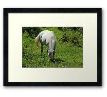 White Horse on a Farm Framed Print