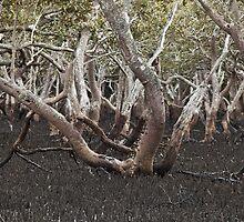The Mangroves by MagnusAgren