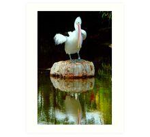 Pelican at Melbourne Zoo II Art Print