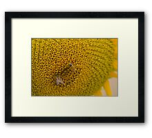 Pair of Busy Bees on Sunflower Framed Print