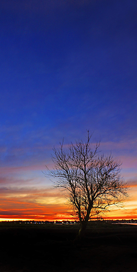 Tree At Dusk  by EOS20
