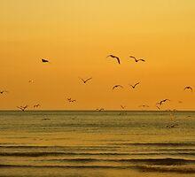 Seagulls At Sunset - Brighton - England by Bryan Freeman