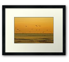 Seagulls At Sunset - Brighton - England Framed Print