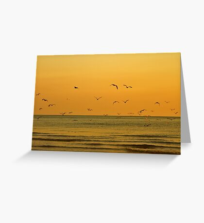 Seagulls At Sunset - Brighton - England Greeting Card