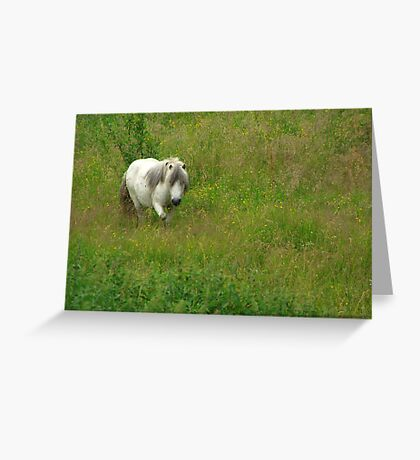Shetland on Summer Camp Greeting Card