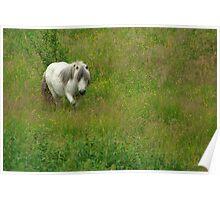 Shetland on Summer Camp Poster