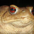 Close Up Portrait of A Common Toad by taiche