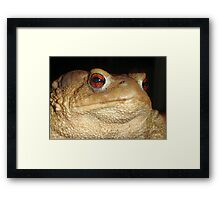 Close Up Portrait of A Common Toad Framed Print
