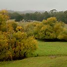 Autumn Rain, Otway Ranges,Forrest,Victoria by Joe Mortelliti