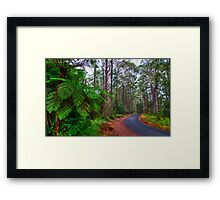 Rainforest - Port Macquarie - Australia Framed Print