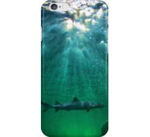 Predators! Sydney Aquarium - Australia iPhone Case/Skin