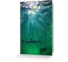 Predators! Sydney Aquarium - Australia Greeting Card
