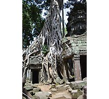 Earthbound - Ta Prohm Photographic Print