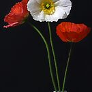 Simply Poppies by Barb Leopold
