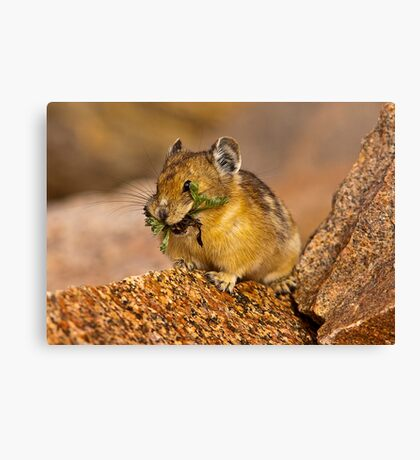 The Pika Project Canvas Print