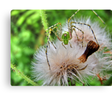Spikes and fluff Canvas Print