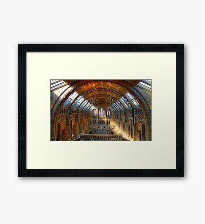 Natural History Museum - London Framed Print