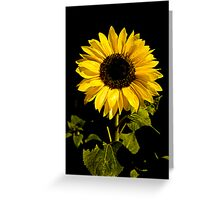 Sunflower Shines Greeting Card