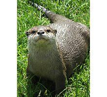 Happy Otter Photographic Print
